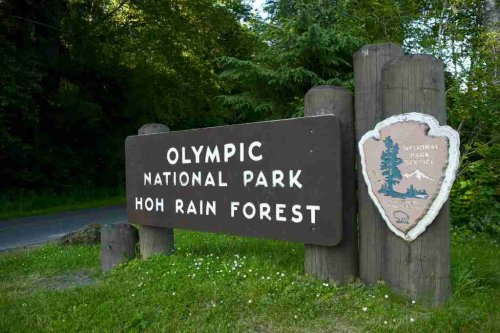 Hoh Rainforest in Washington State – Things to Do and Where to Camp