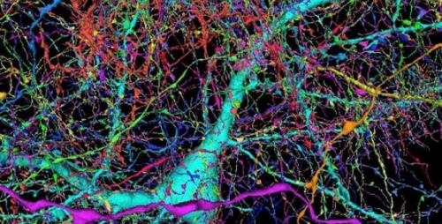 Google создал самую подробную 3D-карту части мозга человека