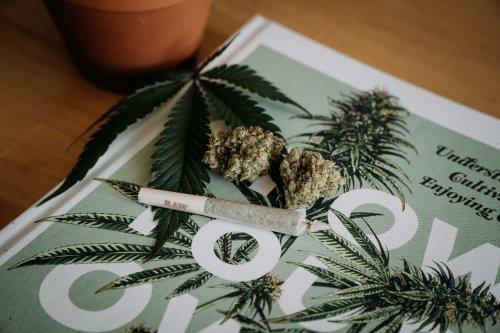 Rekord-Seed-Finanzierung für europäisches Cannabis-Unternehmen