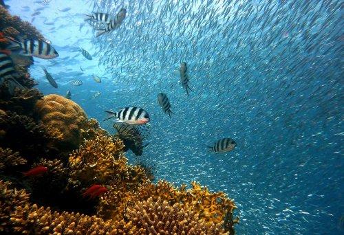 Diese beiden Gründer haben ein System geschaffen, das Küsten schützt und Riffe wiederbelebt