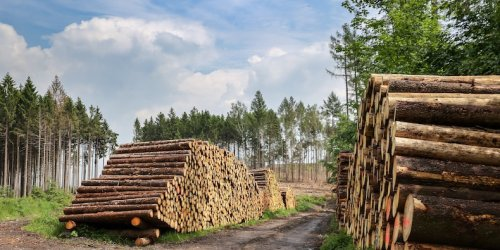 Lumber prices are cooling after rallying over 400% in 12 months. Here is where 4 experts say the red-hot commodity goes from here.
