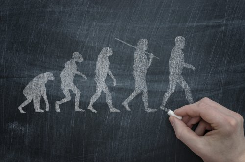 Sechs unnütze Dinge an unseren Körpern, die wir trotz der Evolution immer noch haben