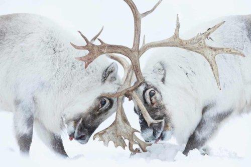 Das sind die besten Wildtier-Fotos des Jahres 2021
