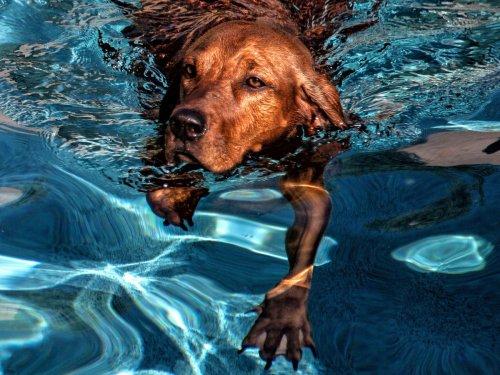 Fünf Dinge, die ihr eurem Hund an heißen Tagen nicht antun solltet