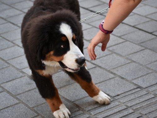 9 überraschende Anzeichen, dass euer Hund euch nicht mag — auch wenn ihr es nicht wahrhaben wollt