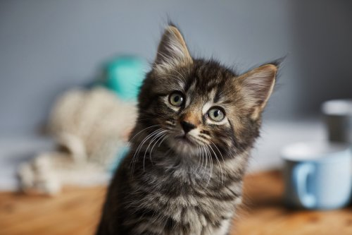 13 Dinge, die ihr niemals mit eurer Katze tun solltet