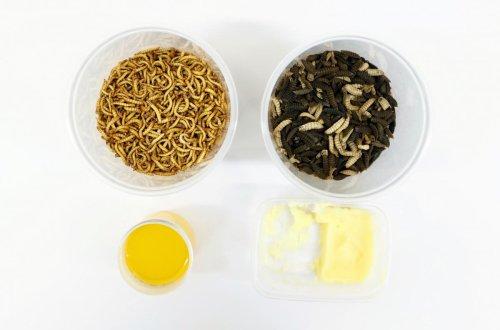 Comer gusanos está a punto de convertirse en algo más normal de lo que piensas: el gusano de la harina es el primer insecto comestible autorizado por la UE