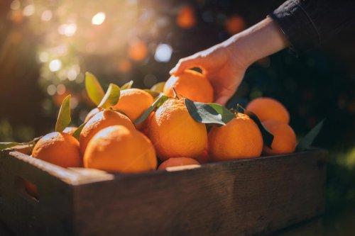 La vitamina C es necesaria para el ser humano, pero los expertos advierten: es perjudicial tomar poca, pero no se debe sobrepasar la dosis diaria recomendada
