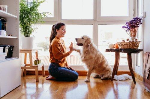Si tienes o planeas tener un perro potencialmente peligroso, estás obligado a asegurarlo
