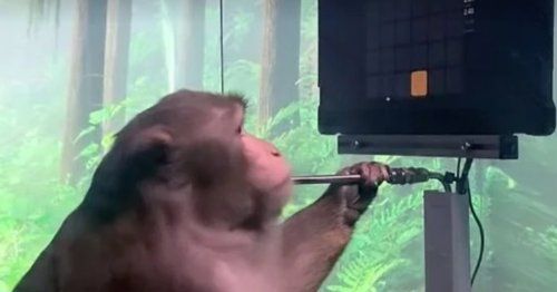Inverse Daily: Is the monkey Pong video the future? Or something else?