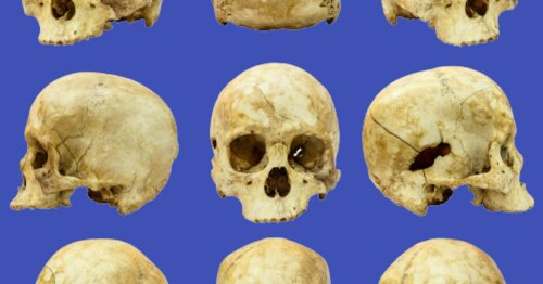 Down on the body farm: Unlocking the forensic secrets of decaying corpses