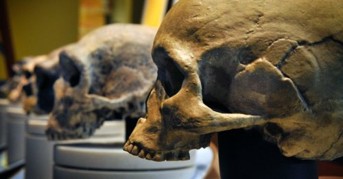 "Sex between different types of ancient humans resulted in ""genetic resistance"""