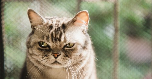 Does my cat want to be left alone? Pet experts reveal the surprising answer