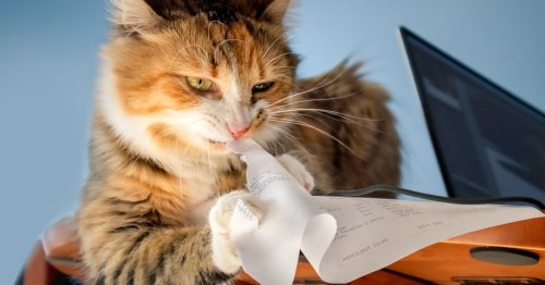 How to help a stressed cat: 4 tricks according to an expert