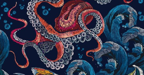 Look: An alien-like new cephalopod was found deep in the ocean