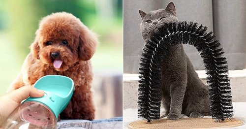 40 weird things for dogs & cats on Amazon that are totally genius