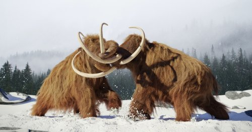 This is the year scientists say woolly mammoths will be brought back to life
