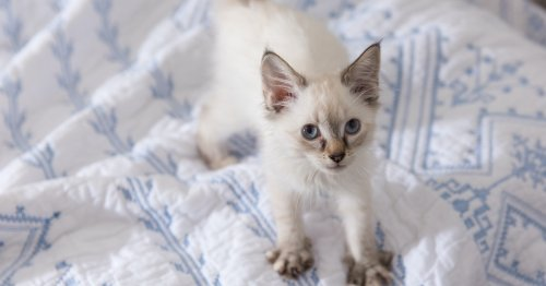 Why does my cat knead with its paws? A vet explains