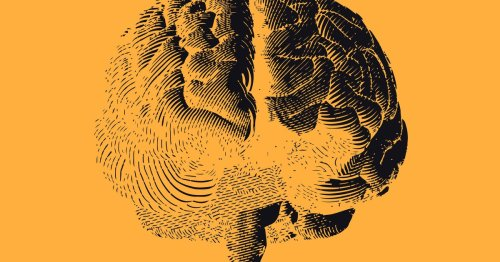 """""""Brain prints"""" reveal how your mind changes over time"""