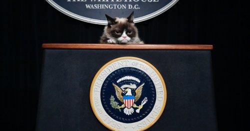 Grumpy Cat's estate keeps suing copycats
