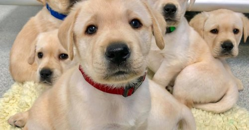 The scientific reason why puppies just get you