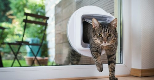 The real reason people won't let their cats outside