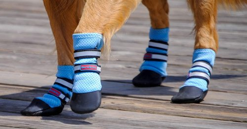 Here's How To Choose The Best Summer Boots For Your Dog, According To Experts