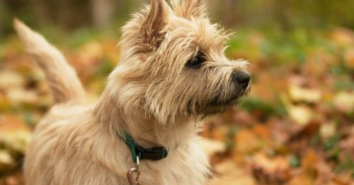 12 Dog Breeds That Can Be Left Alone