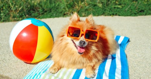 How do you cool down an overheated dog? 7 questions to ask during a heatwave