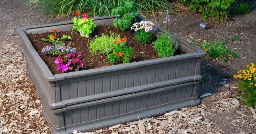 Thinking About Growing Vegetables? These Are The Best Garden Beds To Get You Started