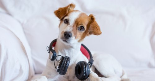 These are the music genres that dogs love listening to most