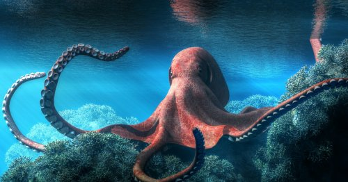 5 ways cephalopods are changing what we know about life