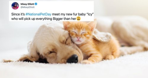 Here Are All The Cutest Dog & Cat Photos From National Pet Day This Year
