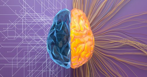 Adult language learning literally reroutes brain networks — study