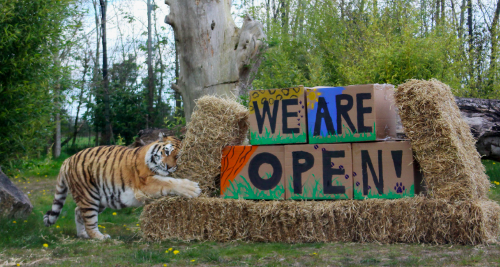 Tayto Park Zoo announces official reopening date