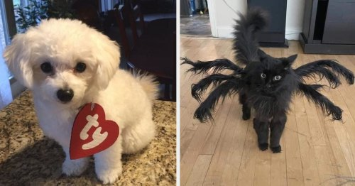 31 Pet Halloween Costumes That Were So Cute, They Caused The Internet To Collectively Implode