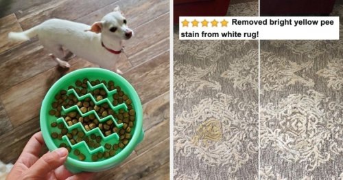 """30 Problem-Solving Pet Products From Amazon Reviewers Say Worked After They Tried """"Everything"""""""