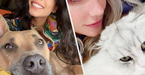 These 17 Tweets Hilariously Demonstrate The Differences Between Cat People And Dog People