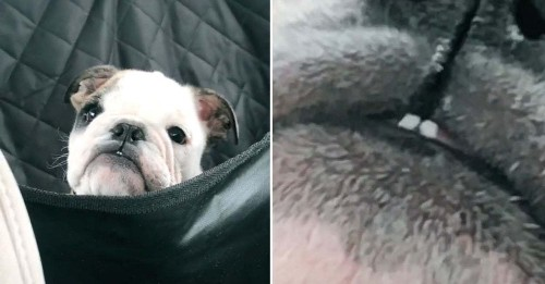 14 Dog Posts From This Week That Are (More Or Less) Proven To Produce Serotonin