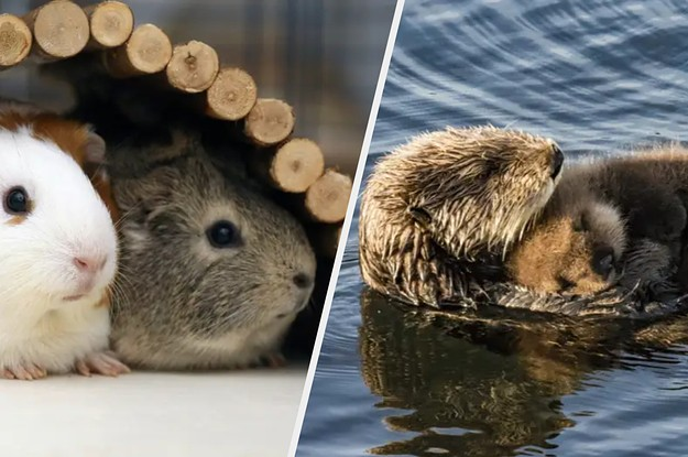 24 Adorable Animal Facts That I Think It's Important For You To See Today