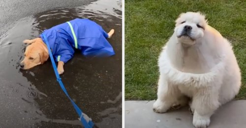 31 Videos That Prove Dogs Are Weird, Wonderful And Abso lutely, 100% Perfect In Every Way