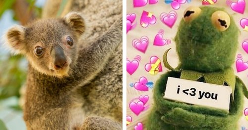 I'm Screaming In Absolute Delight At These Photos Of A Six Month Old Koala Joey