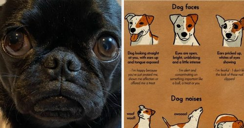 26 Helpful Charts For Dog Owners That Are Cool, Useful, And Potentially Lifesaving