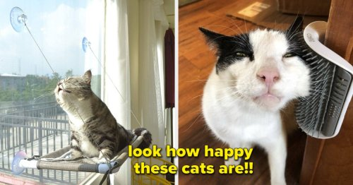 29 Things That Will Make Your Cat Meow With Delight