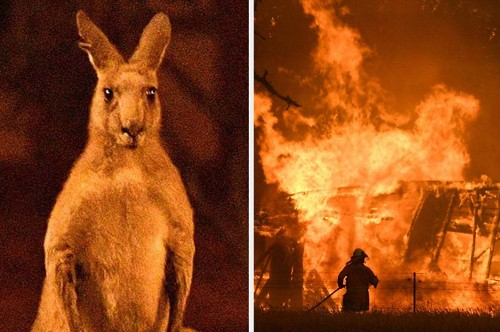 These Horrifying Pictures Show The Deadly Bushfires In Australia