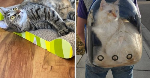 28 Pet Products From Amazon You'll Feel Smart For Owning