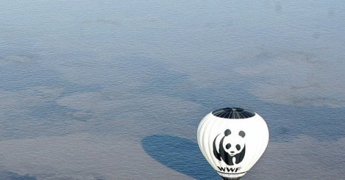 """A Leaked Report Shows WWF Was Warned Years Ago Of """"Frightening"""" Abuses"""