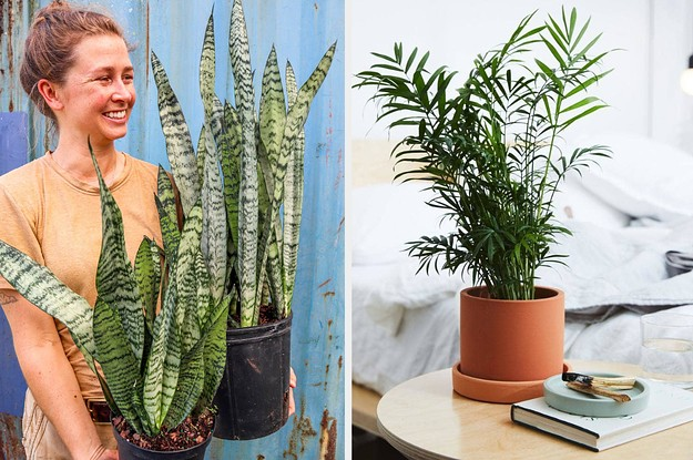 8 Air Purifying Plants That Are Almost Impossible To Kill And Look Great In Any Home