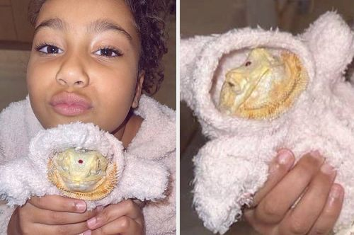 Seems To Me Like Kim Kardashian Basically Stole Her Friend's Bearded Dragon And Now North Is Dressing It In Matching Outfits