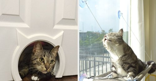 25 Under-$50 Cat Products From Amazon That Are Just Plain Useful